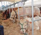 """""""Próg opłacalności hodowli opasów został przekroczony"""" - dyskusja o stawkach [początek lipca 2019]"""