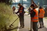 Nie wszystkie trawy w Sosnowcu są koszone. Miasto testuje łąki kwietne