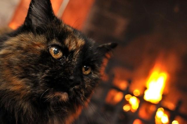 Kot został uratowany