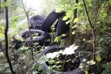 Śmieci – co grozi za nielegalne wyrzucanie odpadów? Za dzikie wysypisko śmieci w lesie płacimy wszyscy, i to słono