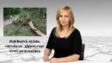 WIADOMOŚCI ECHA DNIA. Dąb Bartek, tężnia, cmentarze - gigantyczne straty po nawałnicy