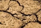 Susza zagraża uprawom na terenie powiatu kazimierskiego. Interwencja posła Adama Cyrańskiego i odpowiedź wicewojewody Rafała Nowaka