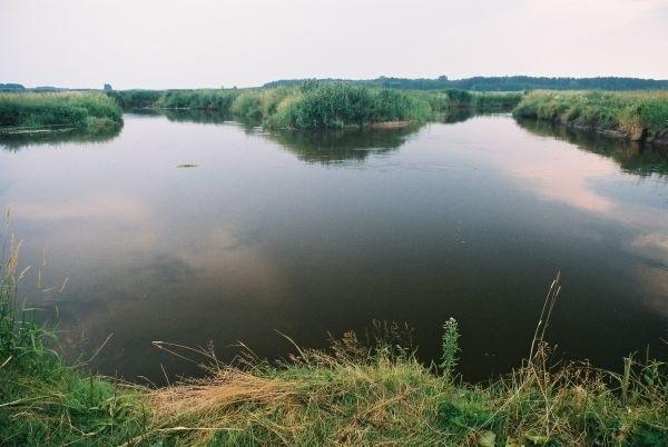 Na wysokości Rybol Narew skreca pod kątem 270 stopni. Po lewej stronie zakole ze spokojna wodą. Wiosną gromadzą sie tu leszcze i plocie a na samym zakrecie w 4-5 metrowej jamie przebywają sumy. Na odcinku tym wielokrotnie obserwowalem ataki boleni