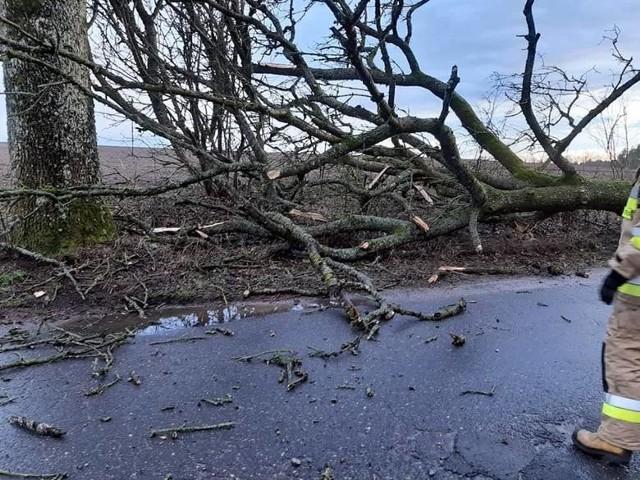 Poprzednie wichury w Szczecinie i regionie i ich skutki - połamane drzewa, zniszczone samochody