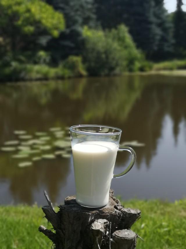 Zaangażowanie producentów mleka, którzy dostarczają surowca do produkcji mleczarskiej, jest kluczowe dla sukcesu strategii Europejskiego Zielonego Ładu