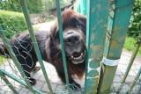 Poznań: Zapadł wyrok w sprawie szczekania psa. Yogi nie jest winny, ale właściciel nie umie nad nim zapanować