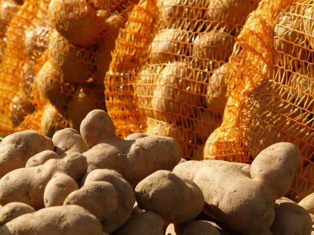 Oddam za darmo, wystarczy zabrać ziemniaki z piwnicy - można przeczytać w ogłoszeniach. Gdzie rolnicy chcą pozbyć się niewykorzystanych i niesprzedanych zbiorów? Zapraszamy na przegląd przykładowych miejsc w Polsce --->