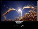 AgroDemoty, czyli rolnicze memy. Takich jeszcze nie widziałeś!