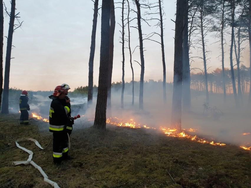 Bezpieczeństwo na wsi. ARiMR i Państwowa Straż Pożarna podpisały porozumienie. Chcą walczyć z wypalaniem traw