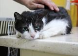 Siedem kotów pani Krysi znalazło nowe domy, podobnie jak 20 innych kotów ze schroniskowej kociarni