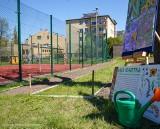 Białystok. Miasto rozpoczyna pilotażowy program utworzenia łąk kwietnych przy szkołach. Projekt zapoczątkował prezydent Truskolaski