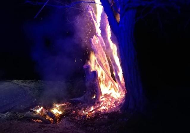 Podpalenia drzew pod Wrocławiem