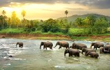 Gdzie wyjechać na wakacje 2018? Sri Lanka podbija serca turystów, również tych z Polski