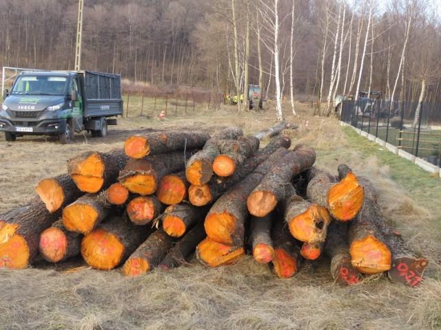 Tak wyglądał pierwszy etap wycinki drzew pod wielką inwestycję w Andrychowie. Jesienią drwale znów tu wrócą