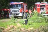 Strażacy z Mysłowic ćwiczyli gaszenie pożaru lasu. Podpalacz podłożył ogień w młodniku