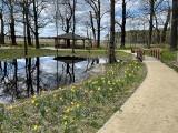 Dworski park w Zielonej Górze Kiełpinie budzi się do życia. Kto go zaprojektował? Ten sam ogrodnik, który stworzył park w Zatoniu