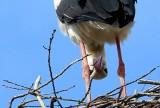 Te ptaki zwiastują już wiosnę. Przyleciały na Dolny Śląsk [GALERIA]