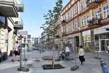 Sosnowiec: Na Modrzejowskiej rosną już drzewa. Przywieziono też nowe ławki ZDJĘCIA