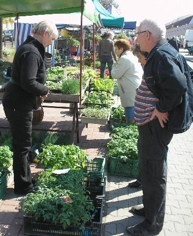 Pani Halina z Górniaka oferuje aż 8 różnych gatunków pomidorów. Jest w czym wybierać.