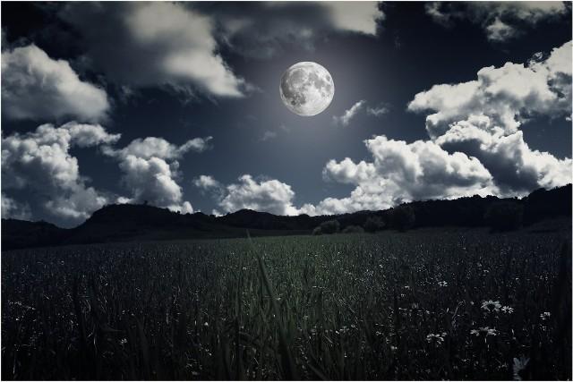Zobacz, jak zaplanować prace ogrodnicze w czerwcu, zgodnie z fazami Księżyca.