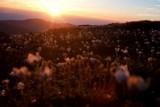 Tak wstawał ten piękny dzień. Wschód słońca widziany z Babiej Góry [ZDJĘCIA]