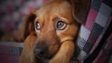 Michałowo. Gmina daje 1500 zł za przygarnięcie bezdomnego psa