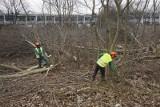 Poznań - Starołęka Mała: Wycięli drzewa pod Park Rekreacji. Teraz unieważnili przetarg [ZDJĘCIA]