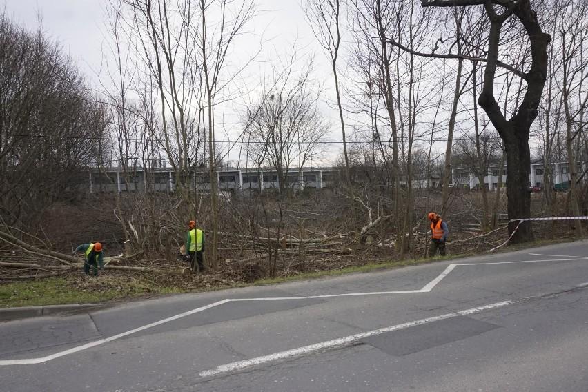 Koalicja ZaZieleń wskazywała, że projekt budowy parku...