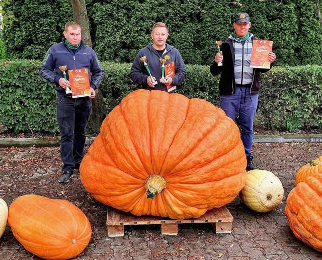 Dokładnie 514 kilogramów ważyła największa dynia, która zwyciężyła w IX Konkursie Uprawy Dyń Olbrzymich w Grzybnie.