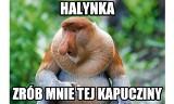 """Imieniny Janusza. Zobacz najlepsze MEMY o Januszach: """"Halynka zrób mnie tej kapucziny"""" [22.11.2019]"""
