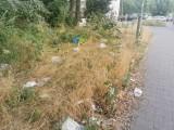 Czy mieszkańcy poznańskiego osiedla będą mieć w końcu czysto? Oskarżają Biedronkę o niesprzątanie śmieci, które lądują na ich terenie