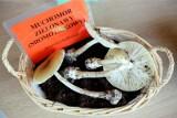 Najpierw zjedli grzyby, potem pojechali na toksykologię z obawy, że były trujące