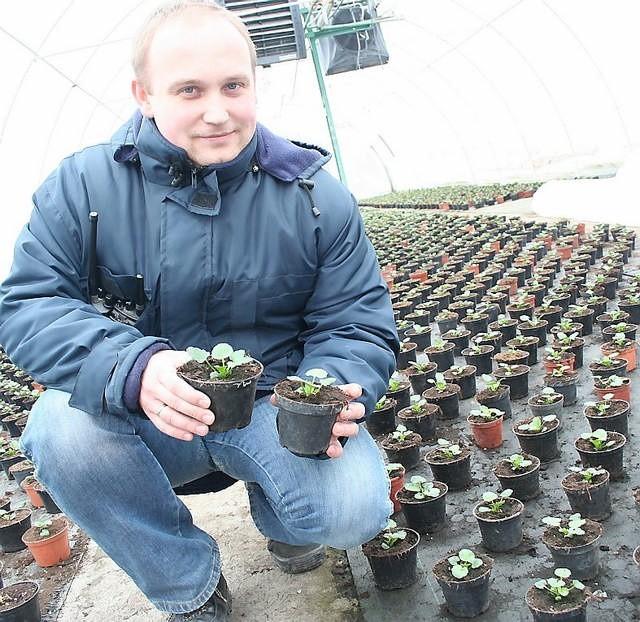 - W połowie kwietnia bratki będą gotowe do sadzenia - mówi brygadzista Przemysław Wojciechowski