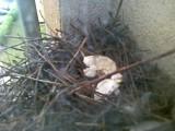 Mieszkaniec wieżowca w Zielonej Górze rozbija gołębie jaja. Sąsiedzi: To sadysta! (zdjęcia internauty)