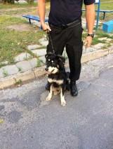Pies przywiązany do przystanku, a przy nim list, dlaczego ktoś się go pozbył