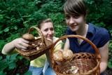 Zbierasz grzyby? Wysyp prawdziwków! Kilogramy grzybów w kilka minut