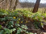 Wiosna na Pomorzu. Zobacz, jak zmienia się krajobraz w okolicach Kościerzyny [ZDJĘCIA]