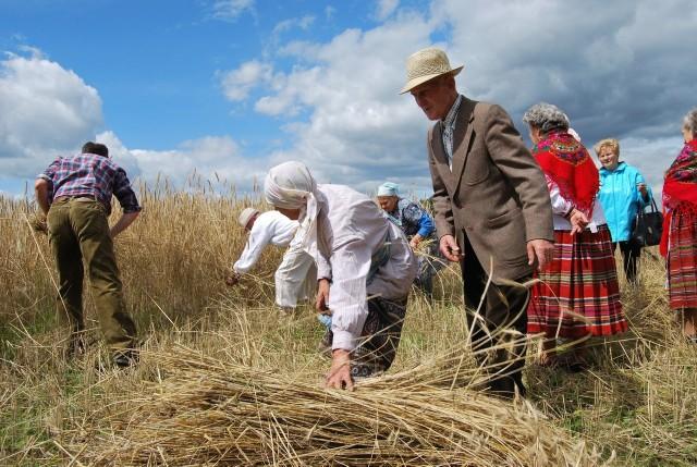 We wsi w czasie żniw mieszkańcy ubierają poleskie stroje i stosują dawne metody zbioru plonów.