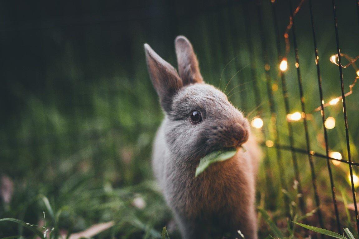 życzenia Wielkanocne 2019 życzenia Na Wielkanoc Najładniejsze
