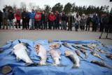 Minister i rybacy bronią dorsze przed wyginięciem