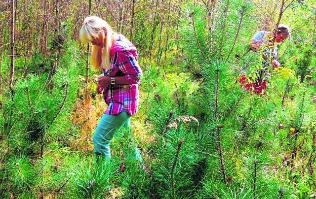 W podłódzkich lasach pojawiły się już grzyby.