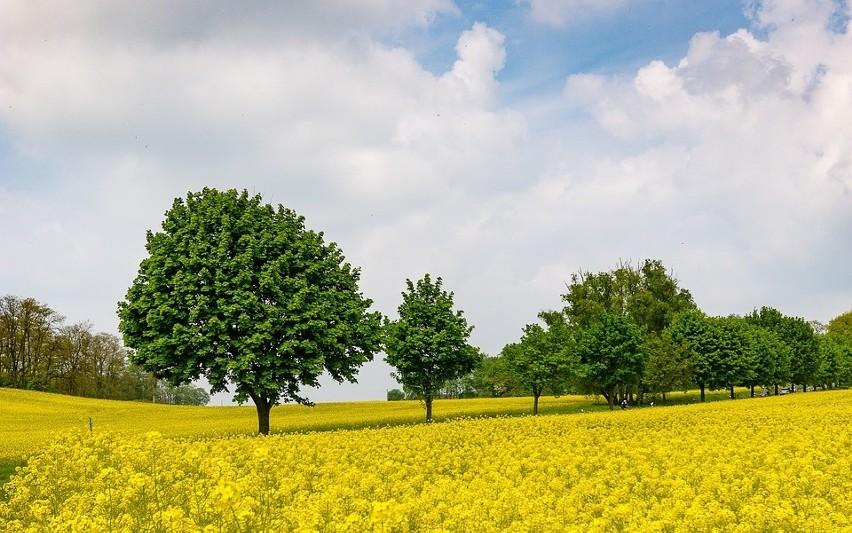 Ubezpieczenia rolne - rusza jesienna kampania 2017