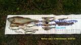Pomorskie: Zanieczyszczenie rzek Niechwaszcz i Wda. Są wyniki badań i nowe fakty. Sprawca z powiatu kościerskiego chce naprawić szkody
