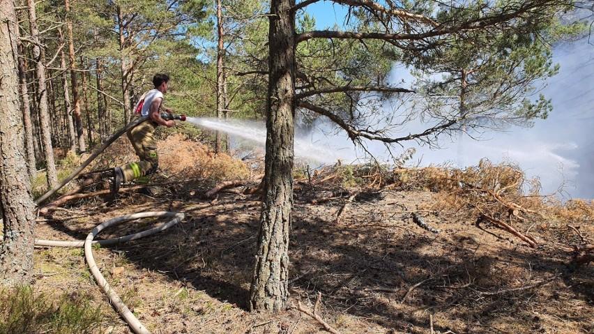 W czwartek w Nadleśnictwie Choczewo spłonęło 20 arów terenów...