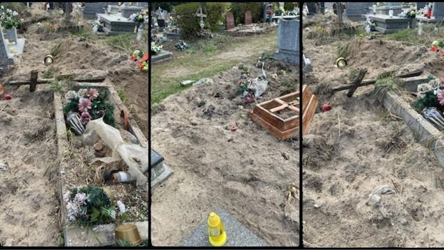 Cmentarz na Junikowie ostatnio upodobały sobie dziki. Biegają między grobami, ale czasami też je przekopują. Wszyscy, którzy wybierają się na cmentarz, powinni uważać. Zaniepokojona zwierzyna może zaatakować.