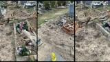 Dziki znowu grasują na cmentarzu Junikowo i niszczą groby. Czytelnicy są oburzeni na brak zdecydowanej reakcji zarządców nekropolii