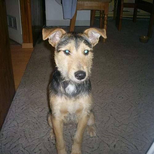 Radni zdecydowali, że od 2009 roku znów będzie obowiązywać tzw. opłata za psa.