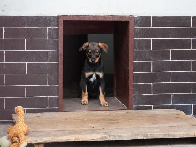 Osoby, które adoptowały psa z krakowskiego schroniska dla bezdomnych zwierząt, są zwolnione z opłaty