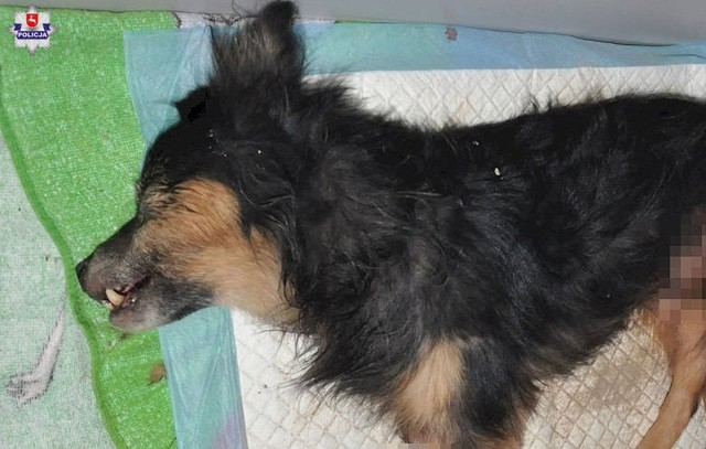 Znamy dalsze losy zakopanego żywcem psa