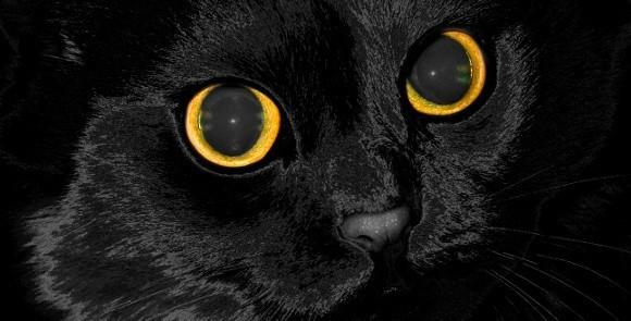 Czarne Koty Sennik